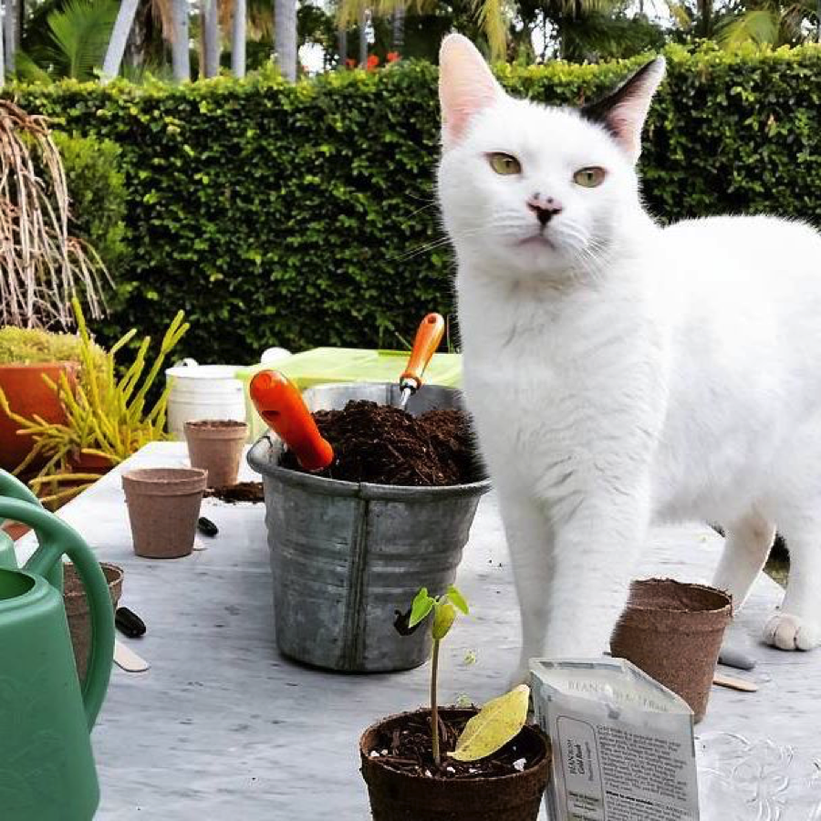 Harry-the-Cat-virginia-robinson-gardens-beverly-hills