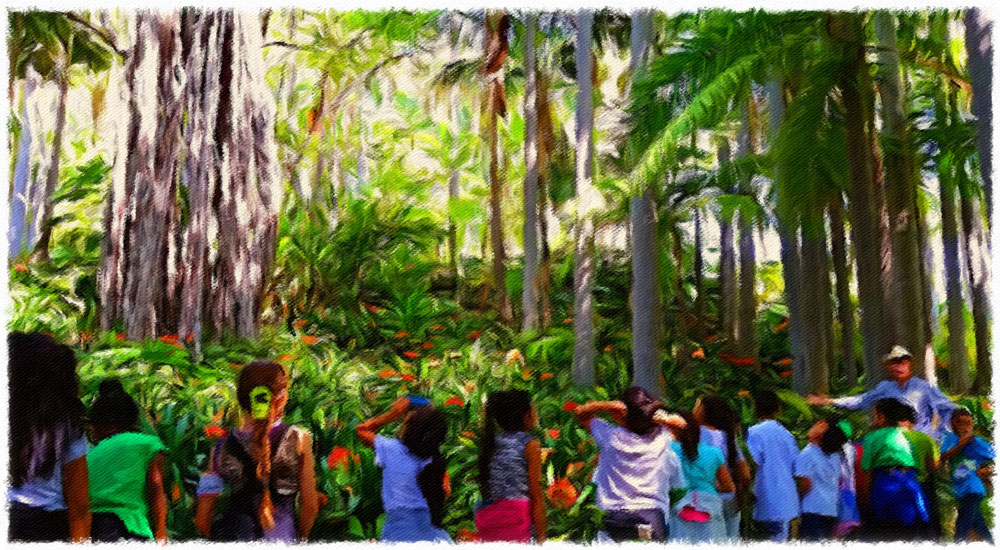Palm-Forest-1a