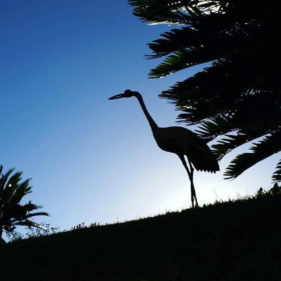 crane-virginia-robinson-gardens-beverly-hills