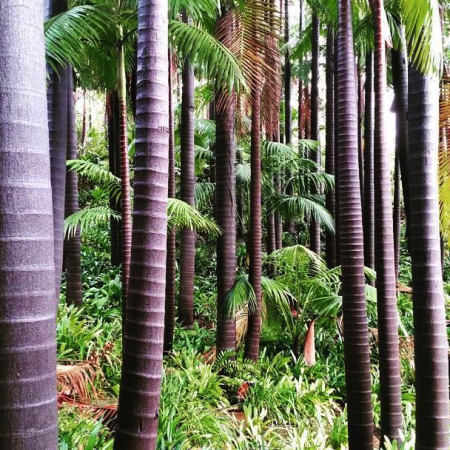 king-palm-forest-virginia-robinson-gardens-beverly-hills