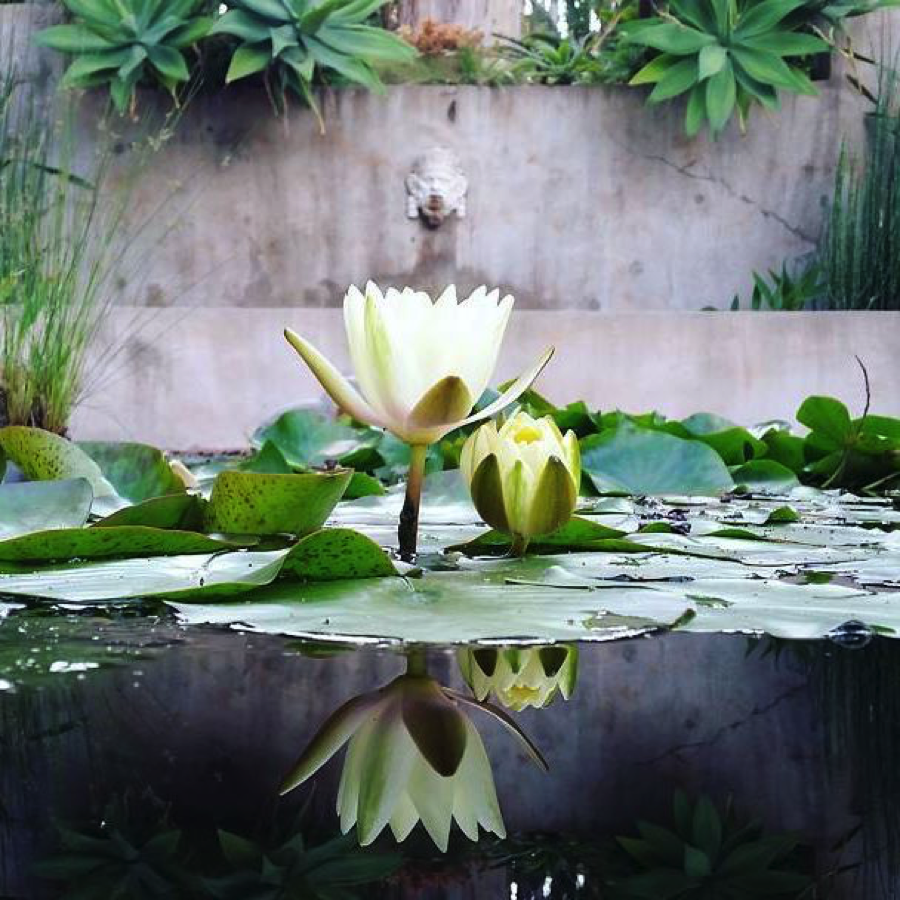 water-lily-fountain-virginia-robinson-gardens-beverly-hills