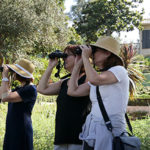 Birdwatching at the Virginia Robinson Gardens