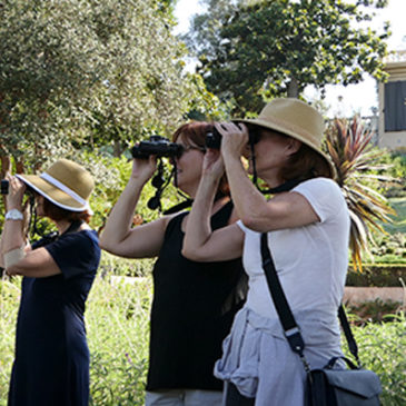 Birdwatching at the Virginia Robinson Gardens