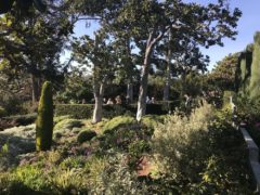 Italian Terrace Garden