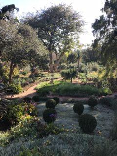 Italian Terrace Garden and Coral Tree